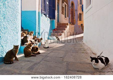 Cats in a street of Mandraki village on Nisyros island.