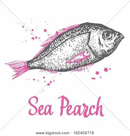 Hand drawn vector illustration with sketch sea pearch. Fish Market. Seafood menu. Brush calligraphy elements for your menu design. Handwritten ink lettering.