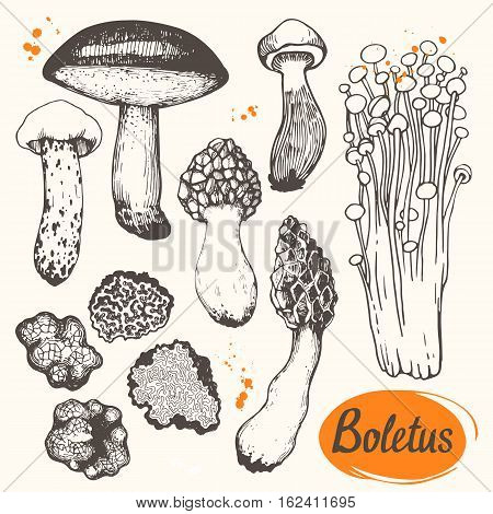 autumn, background, caps, collection, colorful, cute, decor, delicacy, delicious, dinner, drawing, element, fall, food, forest, fresh, gourmet, handmade, illustration, ink, menu, milk, modern, mushroom, nature, organic, painting, paper, print, raw, salty,