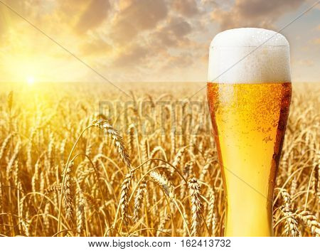 Glass of beer against wheat field and sunset. Light beer in glass with a summer landscape on the background. Beer and wheat field
