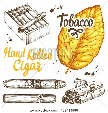Vector illustration with classical smokeking set. Bunch of tobacco and box hand rolled cigars, leaf in sketch style. Best cuban quality.