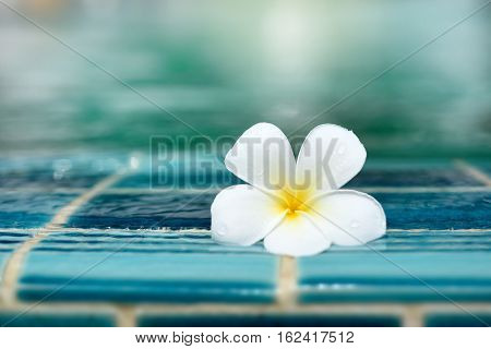 Perfect one White Plumeria flower on ceramic tile border of swimming pool over bokeh blur water background. Copy space. Good for brochure booklet leaflet advertising for spa and hotel or sport club.