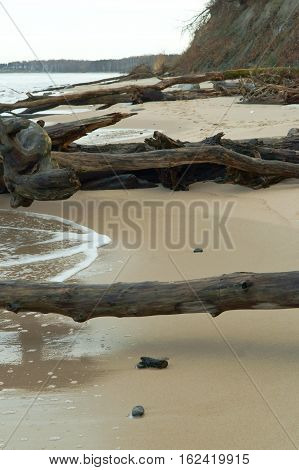 fallen trees on the beach the trunks of fallen trees to the sea