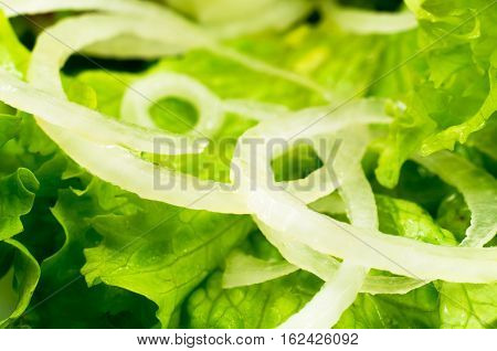 Macro View Of The Leaves Of Lettuce And Onion Rings In A Salad