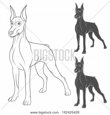 Set of vector illustrations with Doberman. Isolated objects on white.