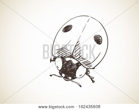 Sketch of ladybug, Hand drawn vector illustration