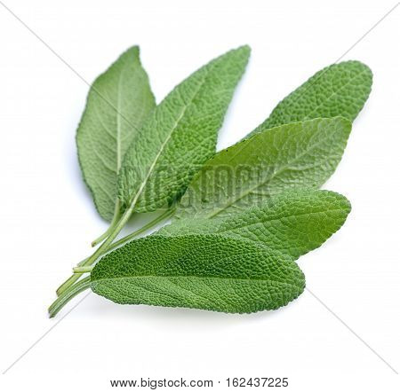 Sage leaves herbs on a white background
