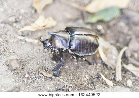 stag beetle on the floor , beetle