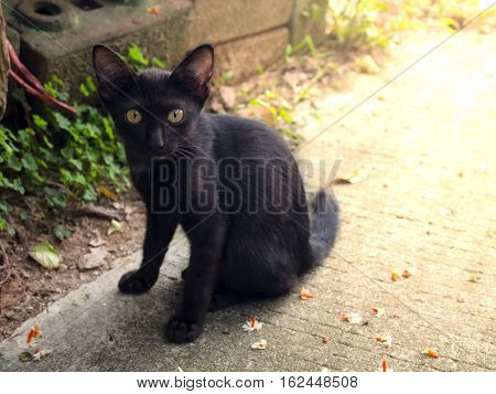 Abstract black Cat sit dow on concrete floor.