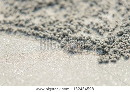 Closeup Crab Near Sand Bubbler Crab Hole
