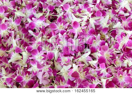 purple orchid flower background - stock photo