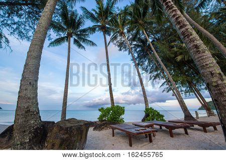 chair at beach among coconut tree or palm tree
