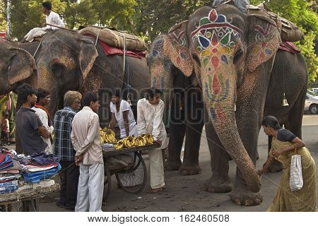 AHMADABAD, INDIA - OCTOBER 31, 2007: Indian lady in a sari feeding an elephant in a street in Ahmadabad, Gujarat, India. Group of men surrounding a cart selling bananas observing.