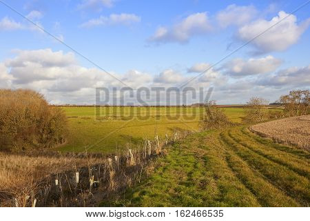 Bridleway In Autumn