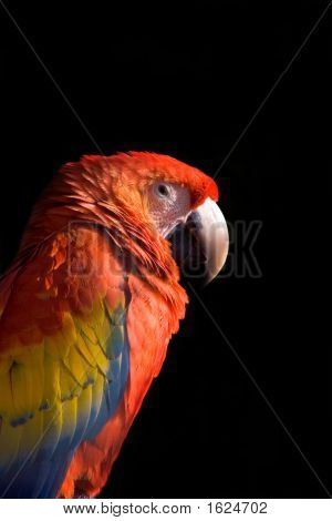 Animal Macaw_01