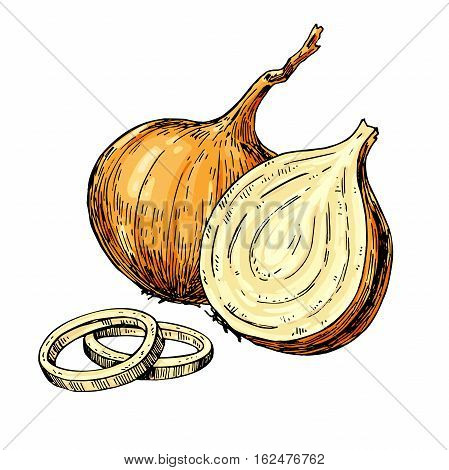 Onion hand drawn vector illustration. Isolated Vegetable artistic style object. Full, rings and Half cutout slice. Detailed vegetarian food drawing. Farm market product. Great for menu, label, icon