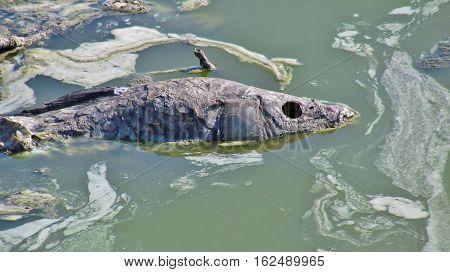 deceased fish lying in the muddy water