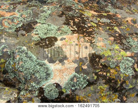 Granite mossy, texture, close-up. Background. A mossy ground in the garden.