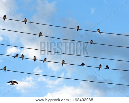 Swallows on wires on sky background. Birds on wires