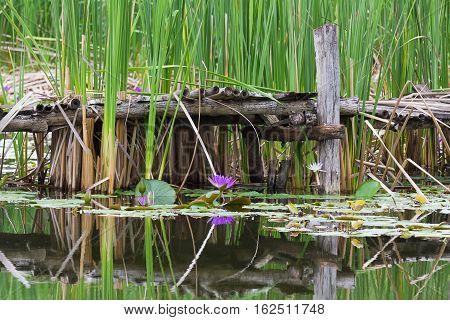 Wild Pond With Old Wooden Bridge