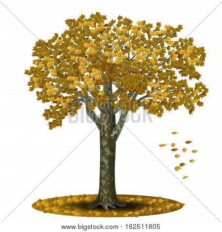 detached tree sycamore with yellow leaves on a white background