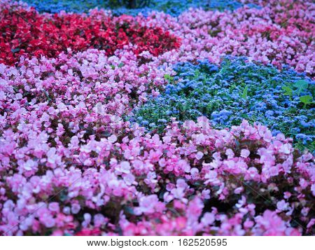 Selective soft focus on colourful field of flowers. Floral background of red, blue and pink flowers close up. Colourful floral pattern closeup.