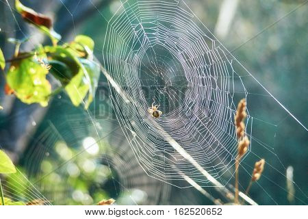 In a taiga, Russia, Siberia. A web with a spider