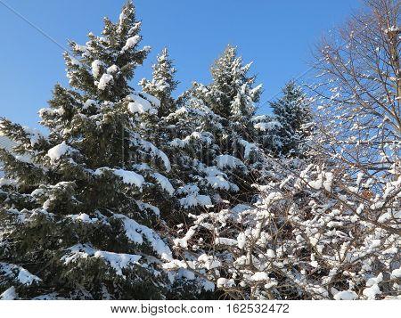 Winter along Seaver Lane in Hoffman Estates, Illinois