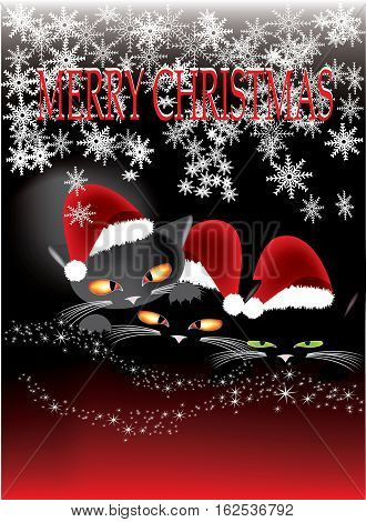 Christmas greetings from cute kittens on black and red background