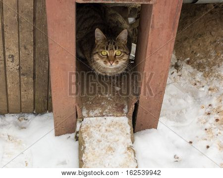 stray cat with big yellow eyes basking in the winter