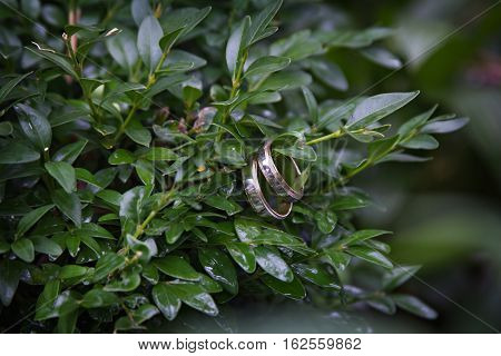 two wedding rings hang on a branch