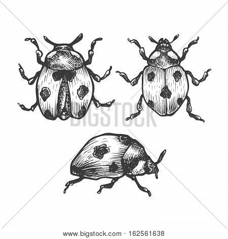 Hand Drawn Set Of Ladybug In Different Poses.