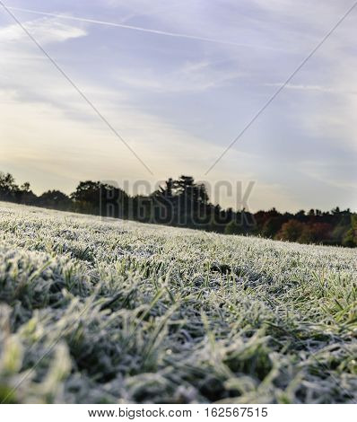 Grassy New England field flecked with morning frost
