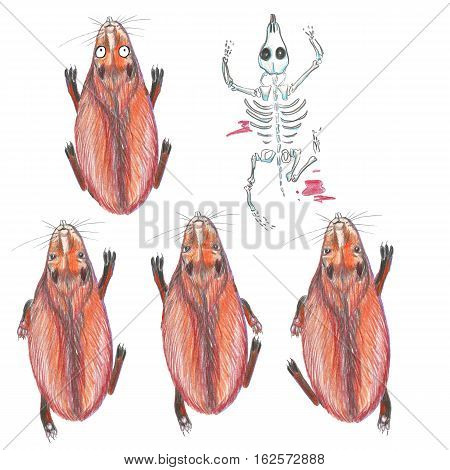 Cute capybaras. Hand drawn illustration. Watercolor pencils.Running capybaras and animals skeleton. Isolated on white.