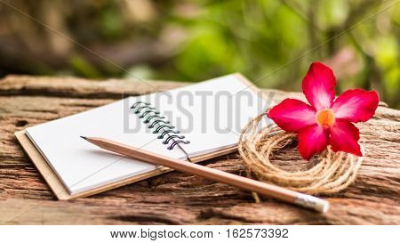 Hands Of Girl Writing