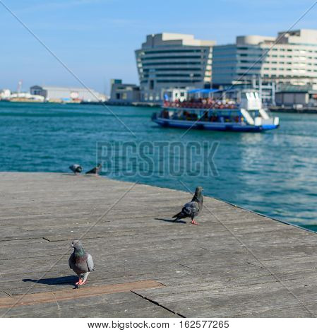 Pigeons In Barcelona Near Water. Black Pigeons, Ship On River And Buildings Behind In Barcelona. .
