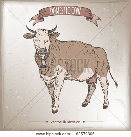 Vintage color label with live cow. Placed on old paper texture. Includes hand drawn elements.