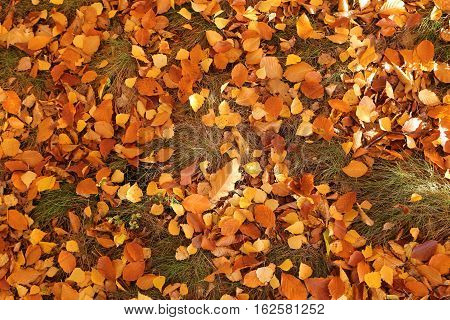 Colorful backround image of fallen autumn leaves.