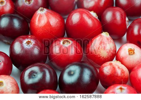 Wild cranberry color shape variation. Red ripe berries macro view. copy space. up view