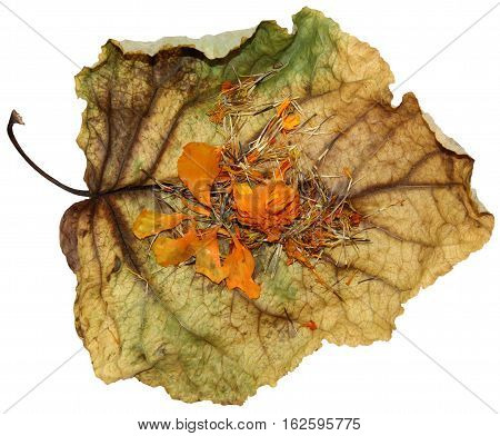 Dried Up Leaves Of Poplar With Geranium