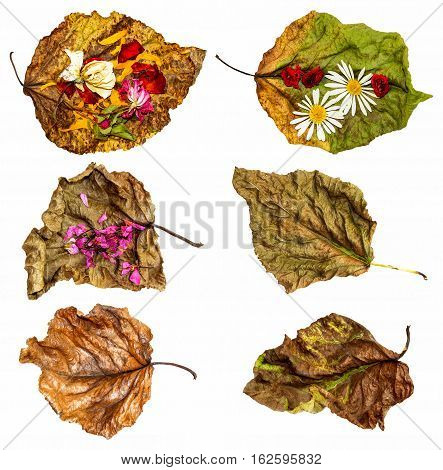 Dried Up Leaves Of Poplar With Rose And Geranium