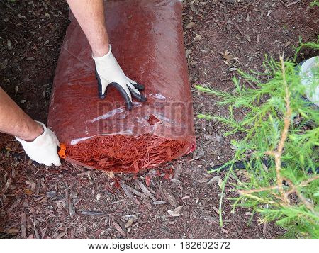 A man prepares to mulch a flower garden to conserve moisture control weeds and insulate plants. Wearing gloves he's opening a bag of cypress mulch.