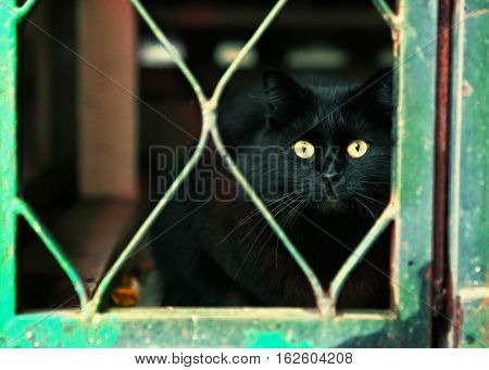 stray black cat in the cellar close up photo