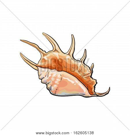 Colorful spiral conch sea shell, sketch style vector illustration isolated on white background. Realistic hand drawing of saltwater conch, sea snail shell