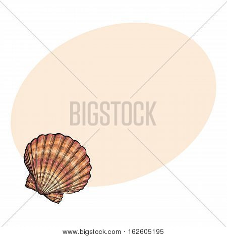Colorful scallop sea shell, sketch style vector illustration isolated on background with place for text. Realistic hand drawing of saltwater scallop seashell, clam, conch
