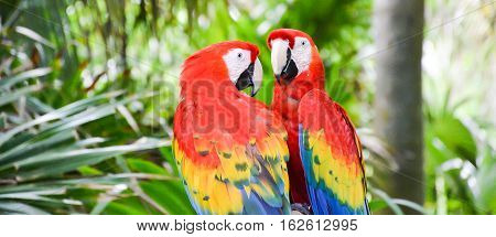 Lovely Colorful couple of Parrots in Zoo