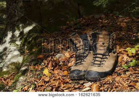 Old shoes under a tree in a wood