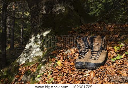 Old tourist hiking shoes on autumn leaves in the woods.