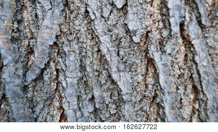 Gray tree bark with cracks and indentations