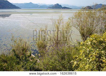 Lake Skadar View In Montenegro